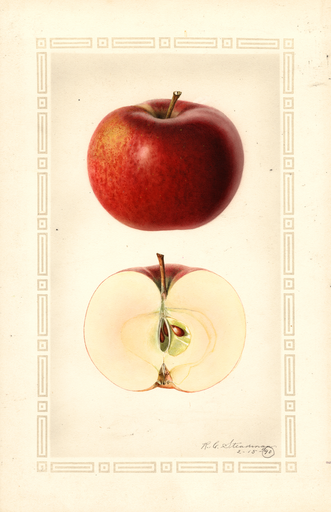 Apples, Hume (1890)