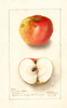 Apples, Gloucester White (1908)