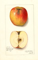 Apples, Lansingburg (1912)