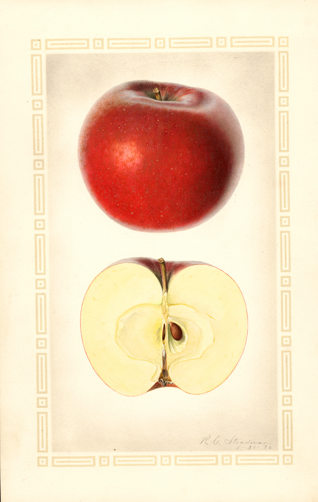 Apples, Lawver (1926)