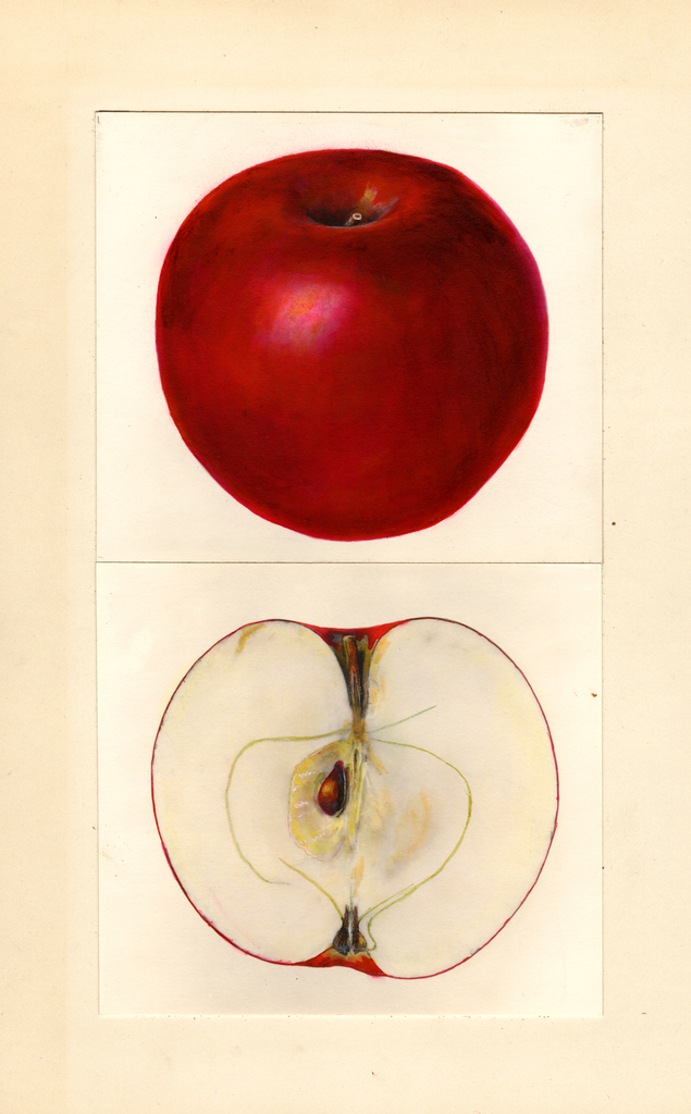 Apples, Joan (1938)