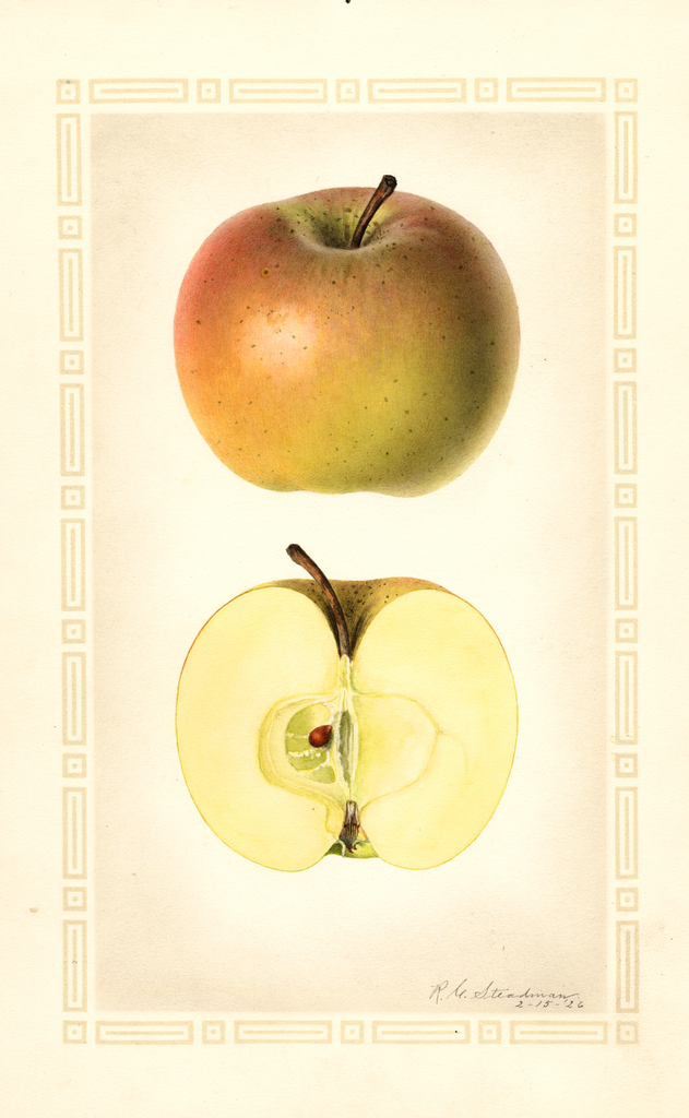 Apples, Keeper (1926)