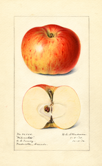 Apples, Milwaukee (1917)