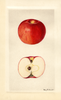 Apples, Missouri Pippin (1928)