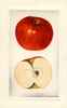 Apples, Lowry (1929)