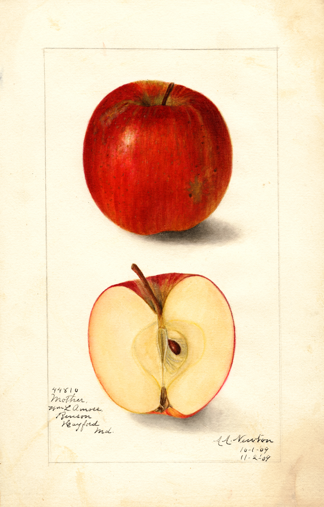 Apples, Mother (1909)