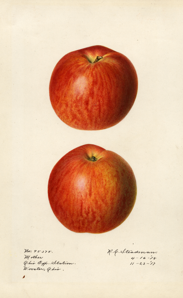 Apples, Mother (1918)