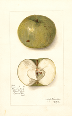 Apples, London Sweet (1910)