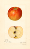 Apples, Muster (1921)