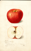 Apples, Nansemond Beauty (1899)