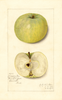 Apples, Maxson Early (1913)