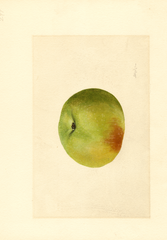 Apples, Newtown (1909)