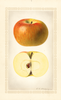 Apples, Mccord (1924)