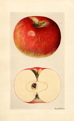Apples, Mccord