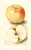 Apples, Mcmahon (1906)