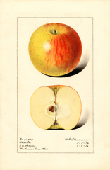 Apples, Rambo (1916)