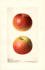 Apples, Rambo (1921)
