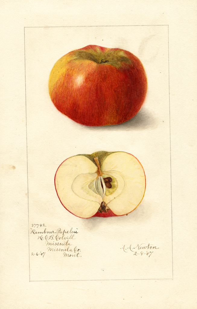 Apples, Rambour Papeleu (1907)