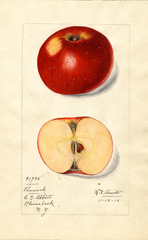 Apples, Pennock (1916)