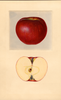 Apples, Perkins (1934)