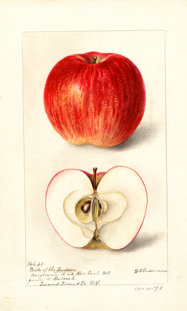 Apples, Pride Of The Hudson (1898)