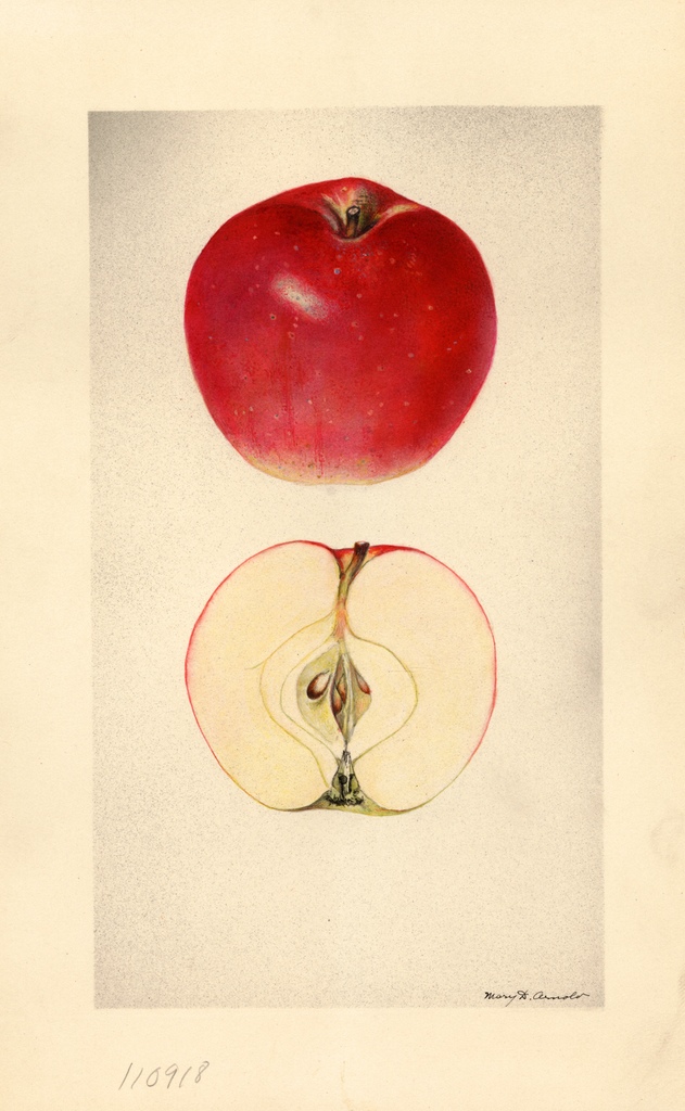 Apples, No. 15 (1929)
