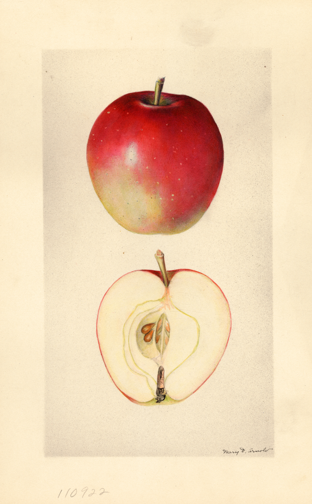 Apples, No. 34
