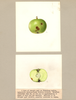 Apples, Oldenburg