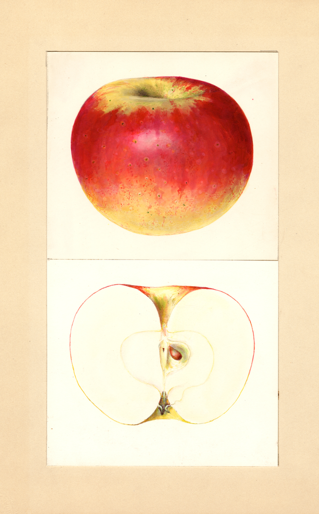Apples, Pedro