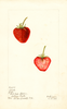 Strawberries, Clyde (1900)