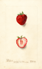 Strawberries, Nick Ohmer (1903)