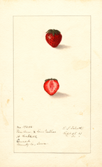 Strawberries (1907)