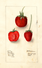 Strawberries, Three W (1908)
