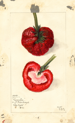 Strawberries, Princess Ena (1912)