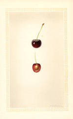 Cherries, Greenwood (1926)