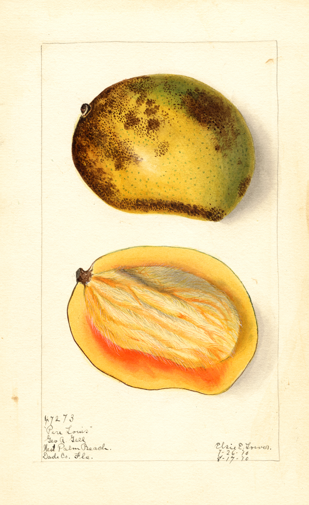 Mangoes, Pere Louis (1910)