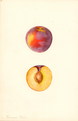 Plums, Farmosa (1940)