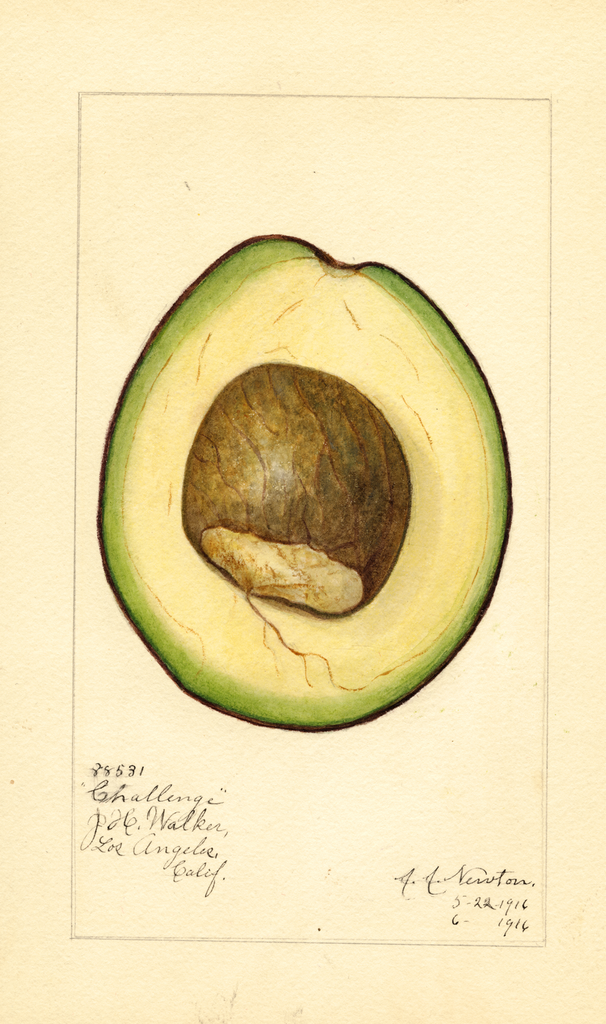 Avocados, Challenge (1916)