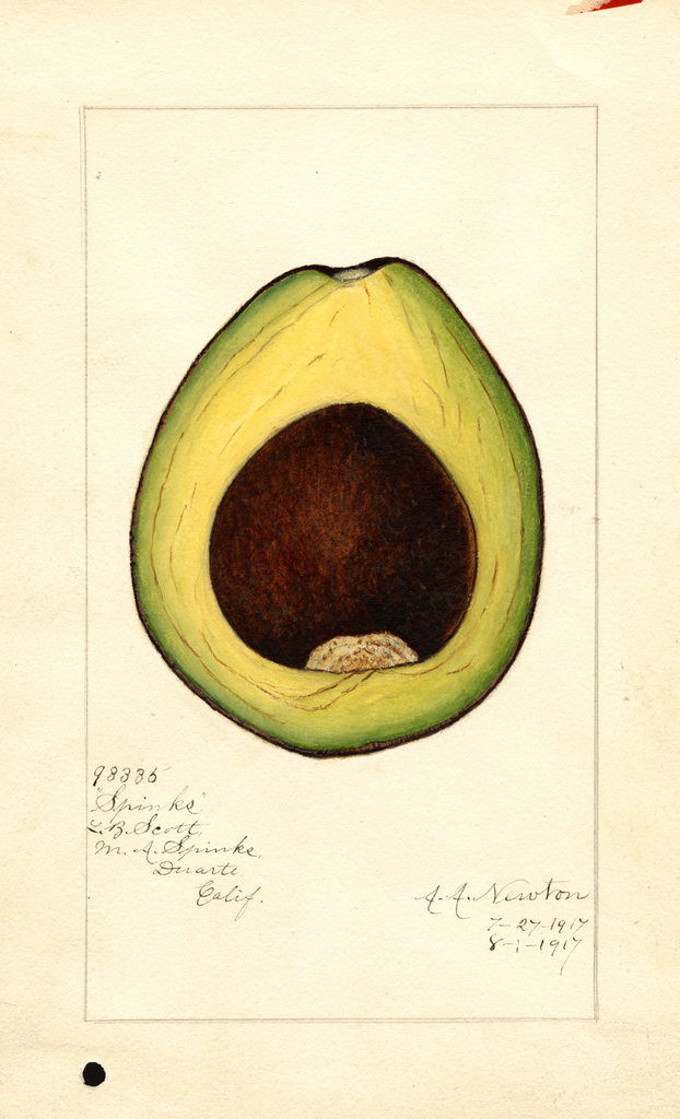 Avocados, Spinks (1917)