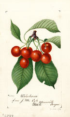 Cherries, Waterhouse (1894)