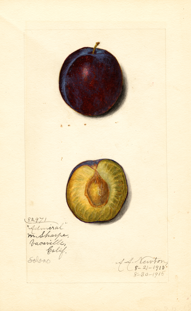 Plums, Admiral (1915)