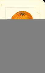 Oranges, Cooper Seedless (1908)