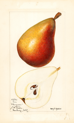 Pears, Clairgeau
