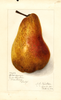 Pears, Clairgeau (1912)