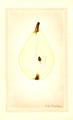 Pears, Clapps Favorite (1924)