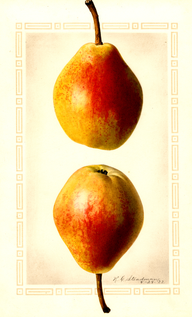 Pears, Clapps Favorite (1922)