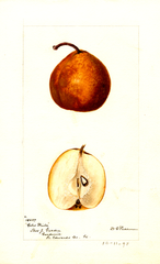 Pears, Coles Winter (1895)