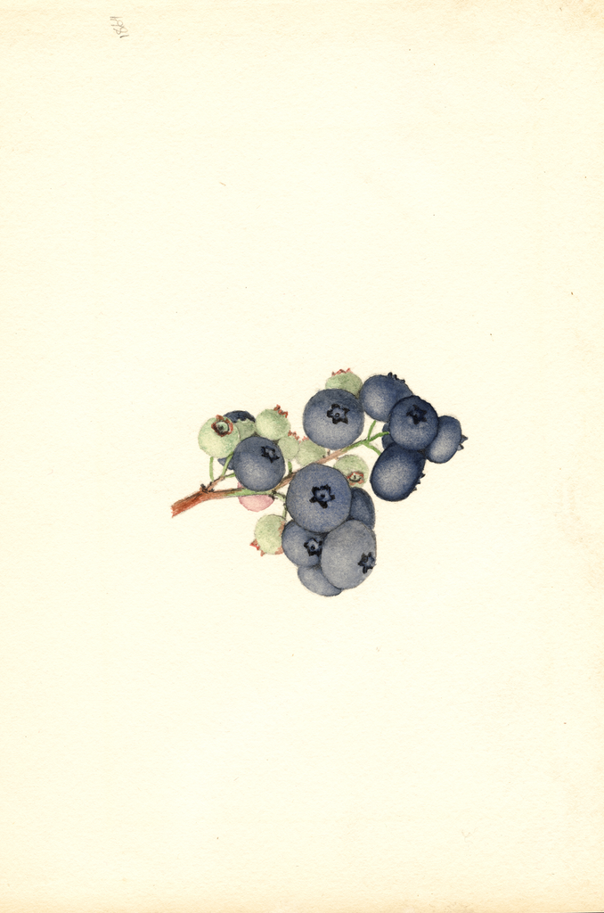 Blueberries, Atlantic (1940)