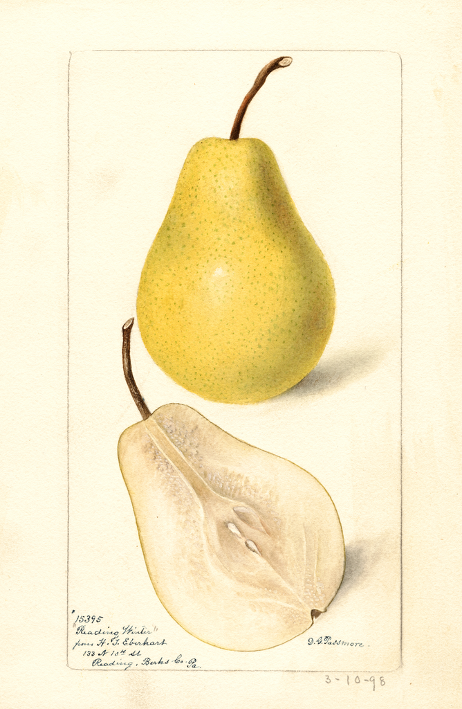 Pears, Reading Winter (1898)