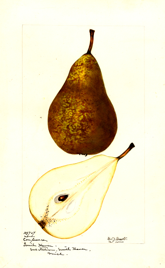Pears, Conference